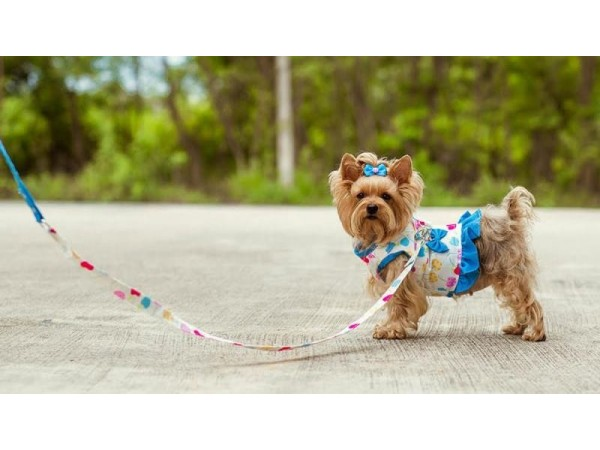 Doggy Dolly: Tendencia en moda canina